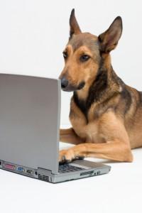 dog_writer